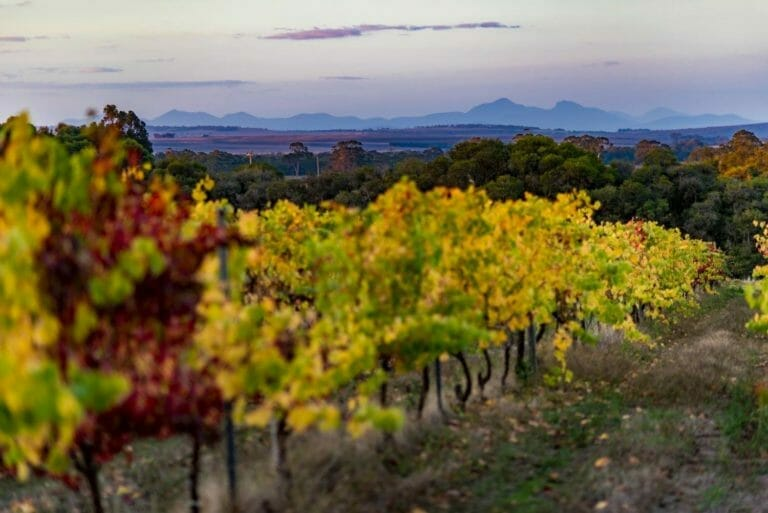 Duke's Vineyard with views of the Porongurup and Stirling Ranges
